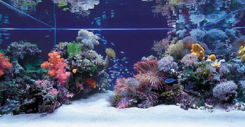 морской аквариум, обслуживание аквариумов,